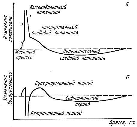Физиология нервов и нервных волокон. Типы нервных волокон — Студопедия