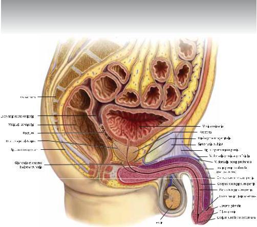 pokazat-v-razreze-dvizhenie-muzhskogo-polovogo-organa-v-zhenskom