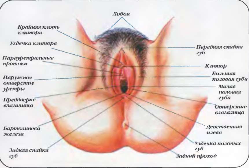 рот для вагина строение онлайн триллер, мелани