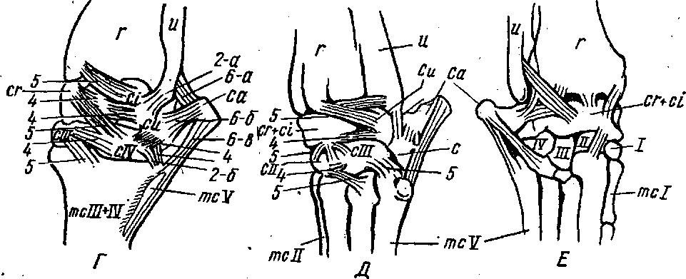 Суставы соединения костей у собак скачать методика доктора бубновского.оздоровление позвоночника и суставов