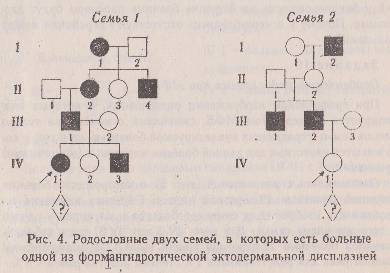 Генетика родословная схема семьи фото 529