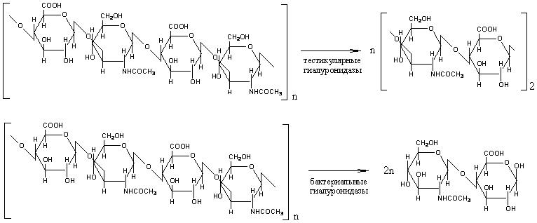 Гиалуроновая кислота химия реферат 9463