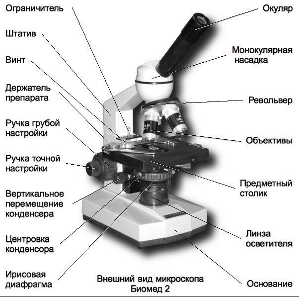 Реферат на тему микроскоп по биологии 7880