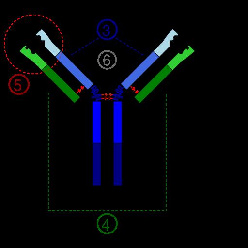 Виды иммунитета человека искусственный и естественный