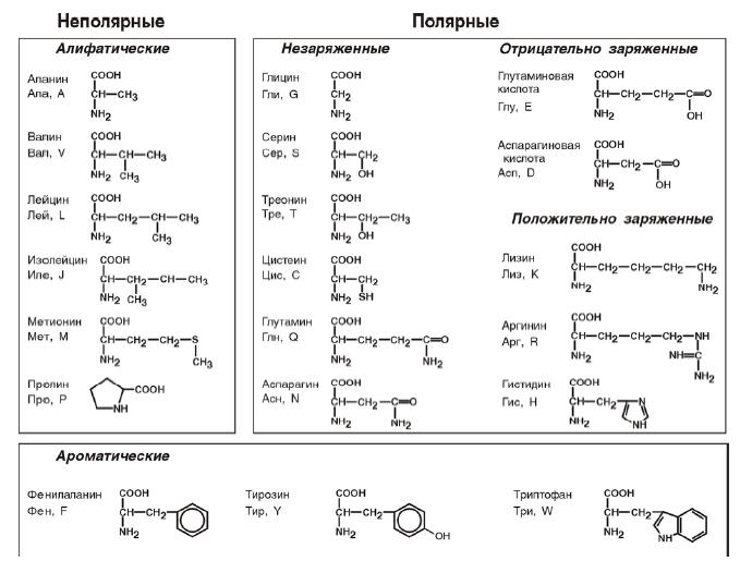 правовращающиеся и левовращающиеся аминокислоты корзину