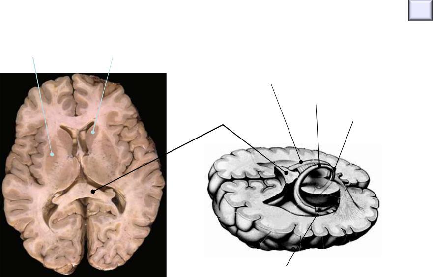 Magnetoterapie pentru ochi acasă. Efectul magnetoterapiei asupra corpului uman