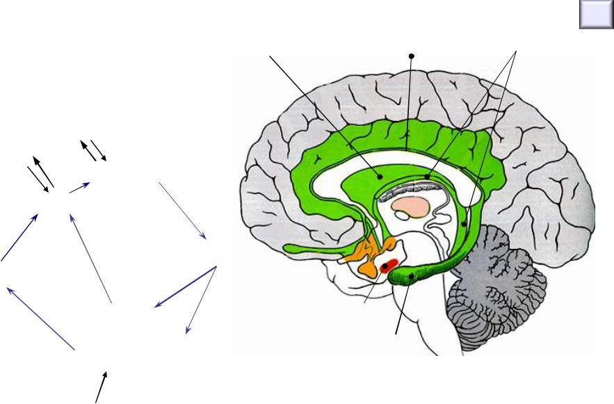 Phlebodia Radar. Phlebodia - Diosmin efectiv de droguri angioprotectoare pe bază de droguri