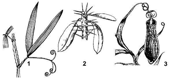 Метаморфозы листа и их биологическое значение реферат 648