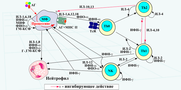 Фактор некроза опухоли реферат 9831