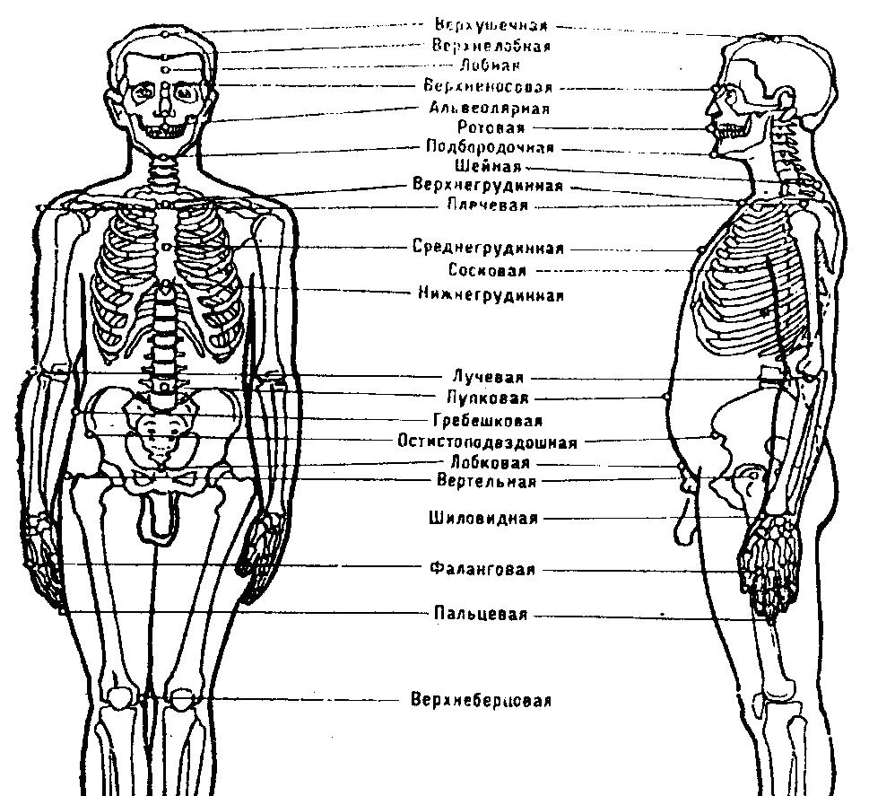 Антропометрические методы исследования реферат 7319
