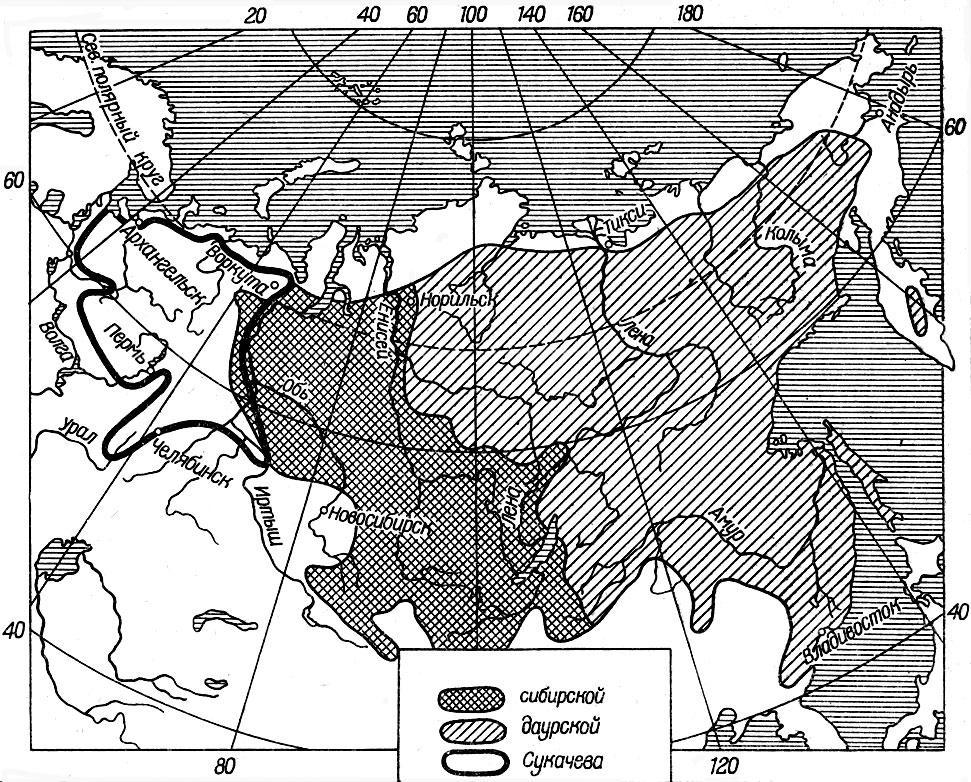 Описание семейства растений тутовые