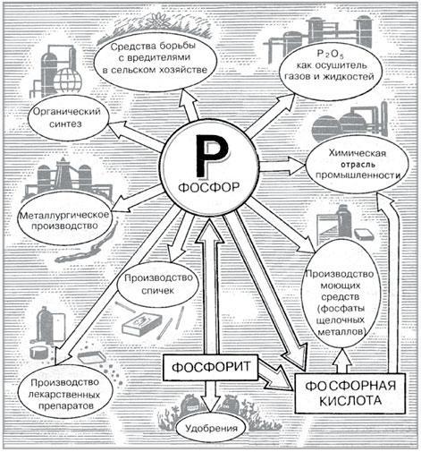 Схема круговорота фосфора в природе фото 499