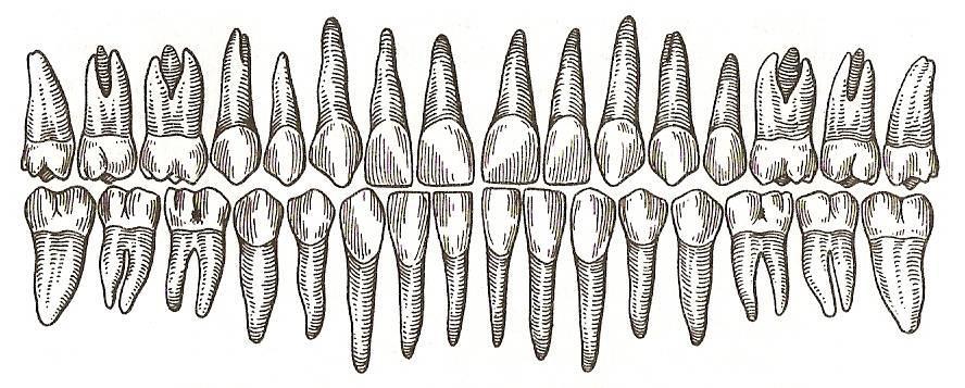Рисунок зубов человека своими руками