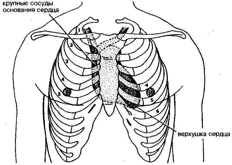 Самым важным органом в человеческом организме является сердце.