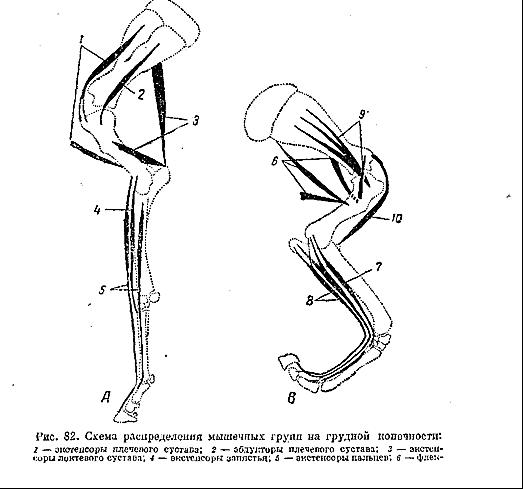 Реферат суставы пальцев животного околосуставную