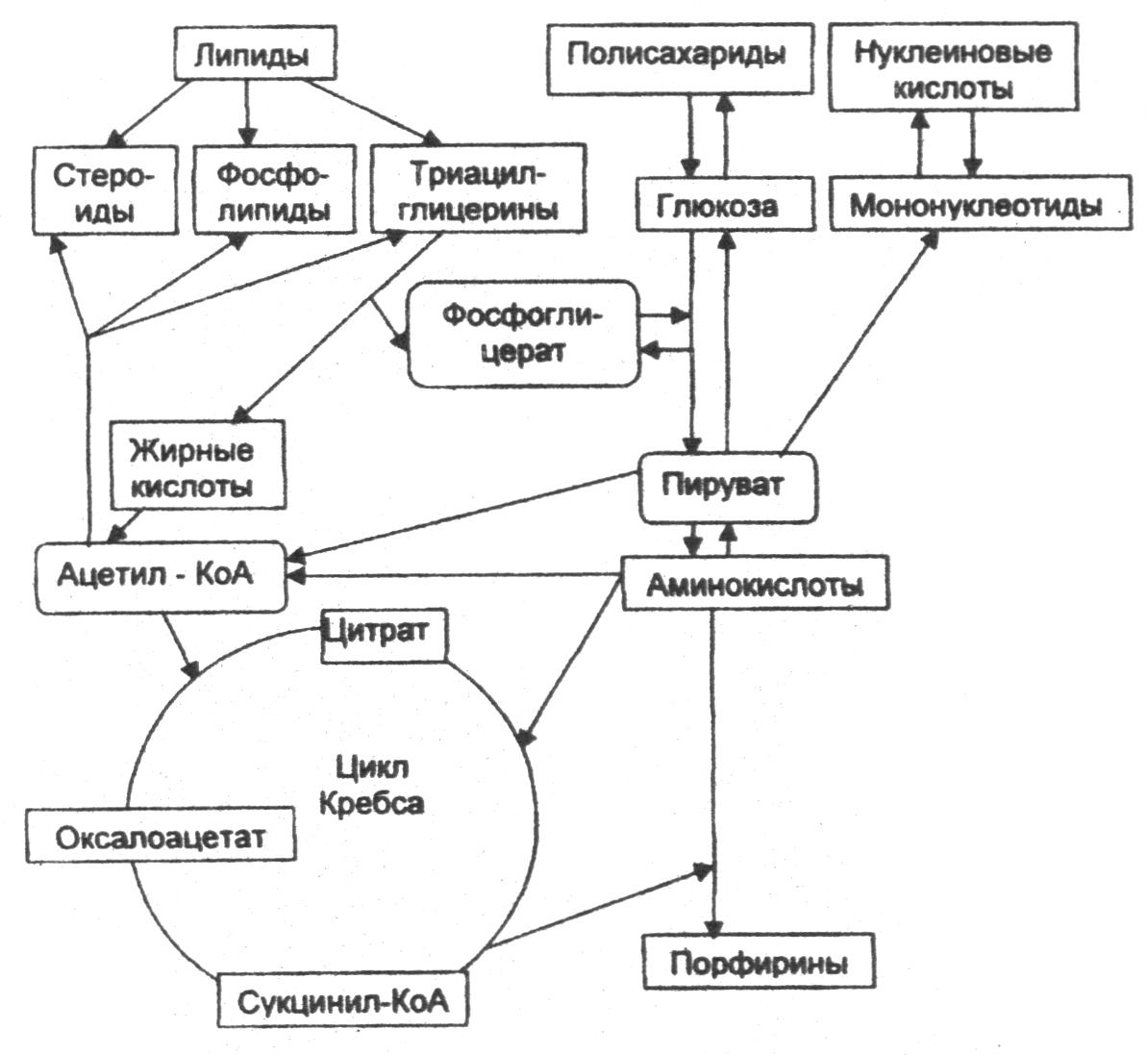 Липиды белки углеводы реферат 4062
