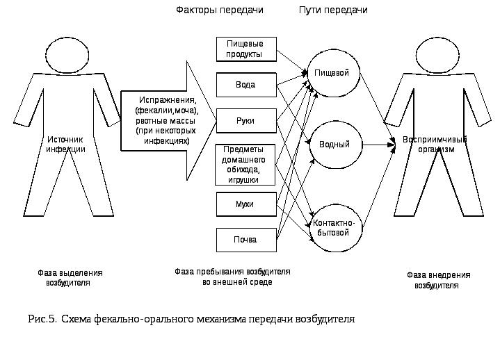 Менингококковый возбудитель жизненный цикл