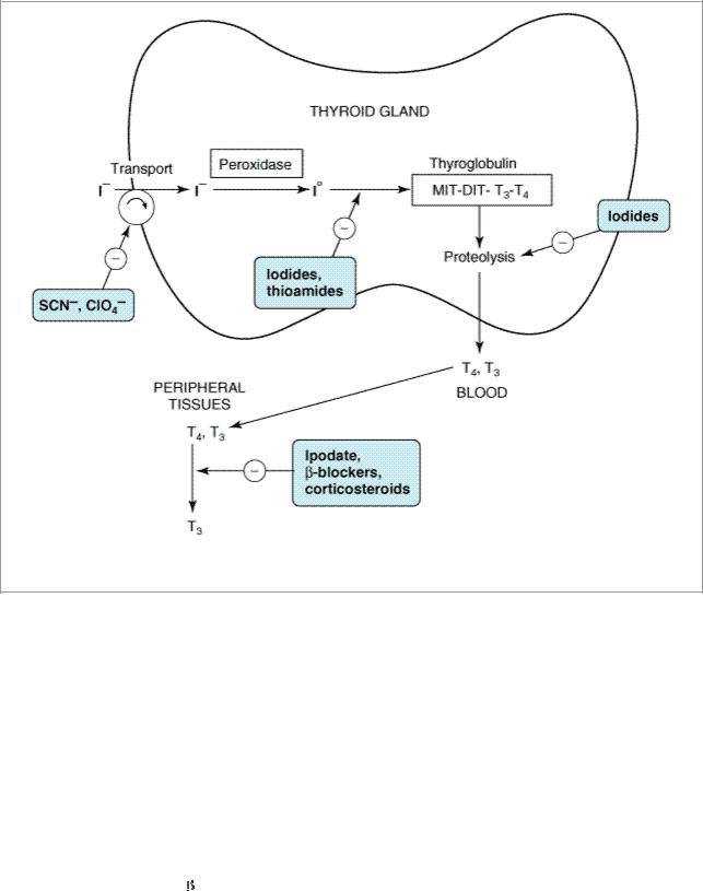 Bertram G Katzung Basic Clinical Pharmacology 9th Edition Str 89