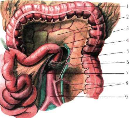 Резиновый член проник глубоко кишечник
