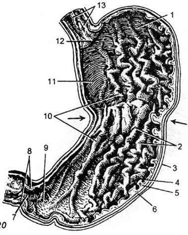 Рак пищевода хирургия
