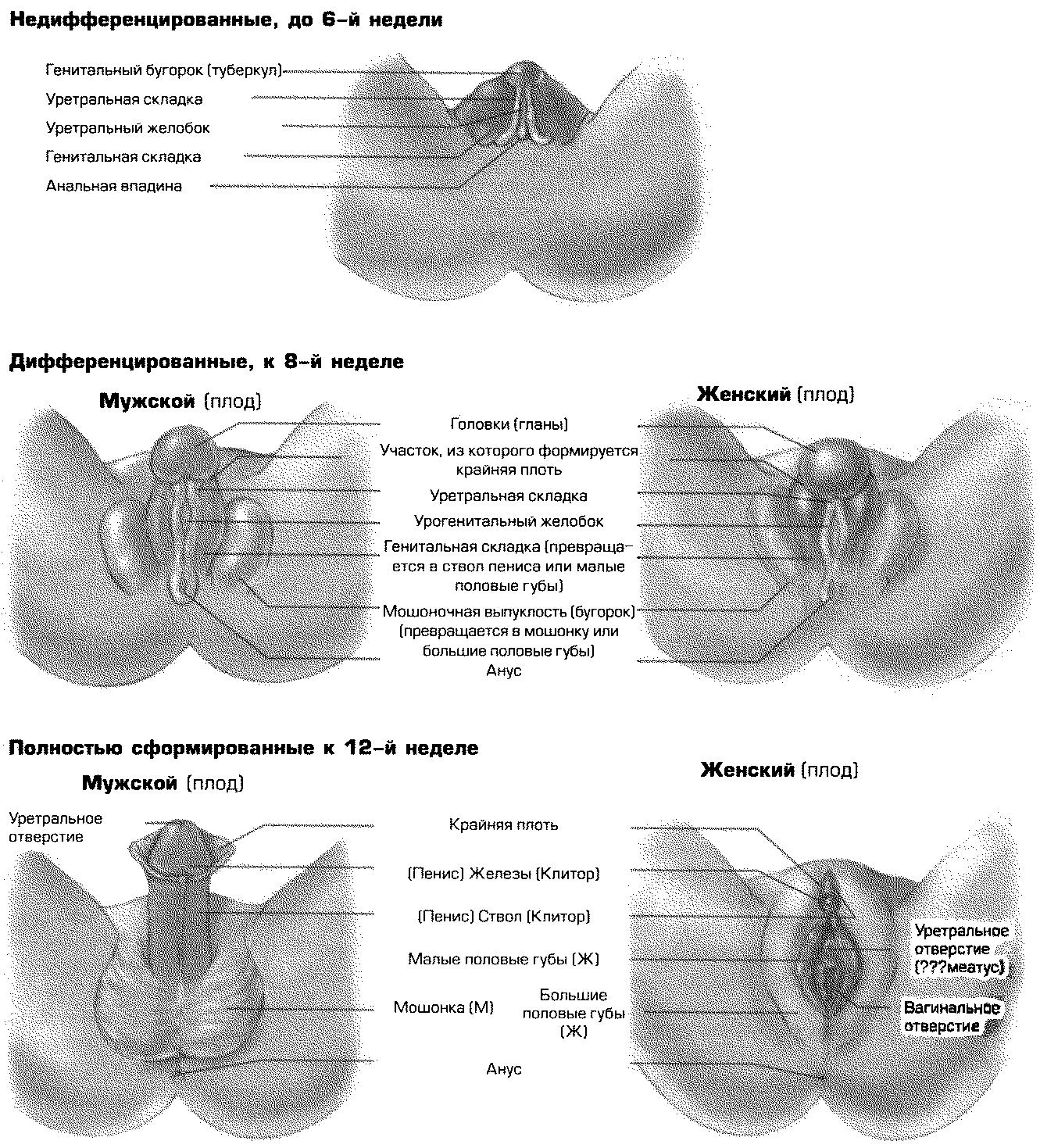 Женская сексология типы вагин — img 13