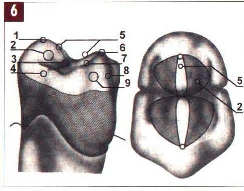 Височно нижнечелюстной сустав характеристика - Лечение Суставов