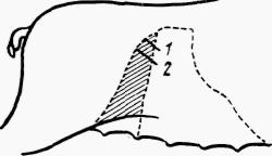 Кастрация хряков осложнения после кастрации