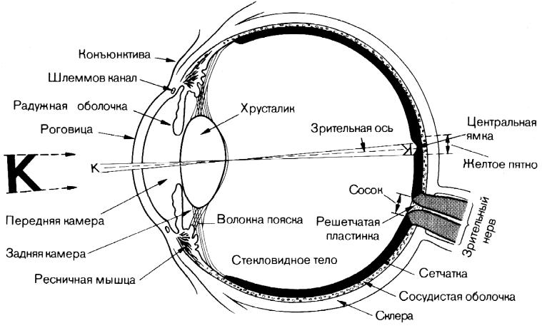 нецентральная зрительная фиксация потология сетчатки очищения