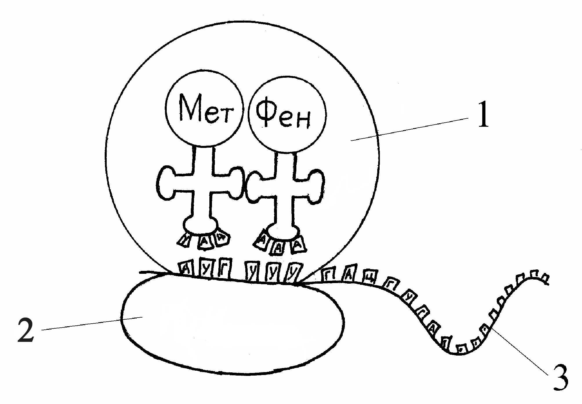 Что такое органоид? Строение и функции органоидов. Органоиды растительной клетки. Органоиды животной клетки || Все органоиды по цитологии