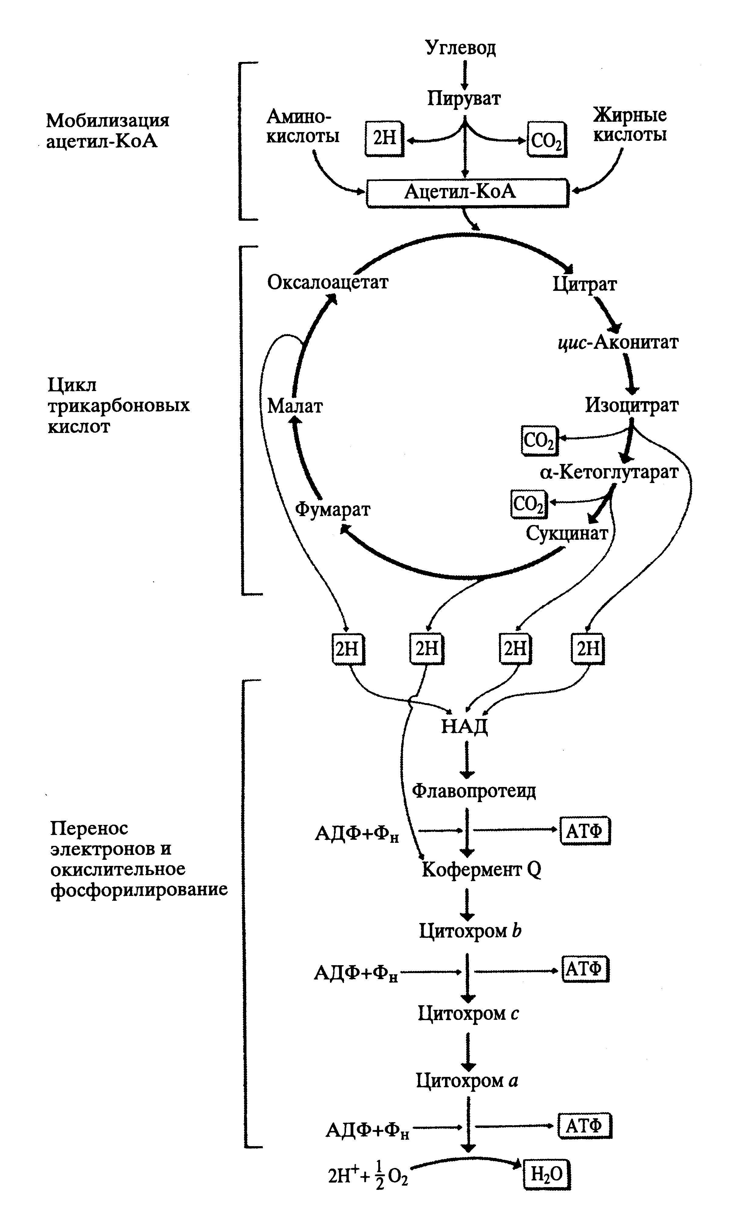 Лекции по цитологии - 1x1 Цитология.doc