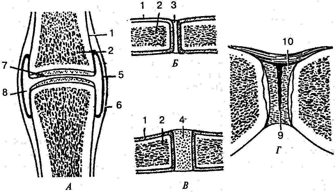 Изображение - Какие кости соединены суставами img-MgWHWn