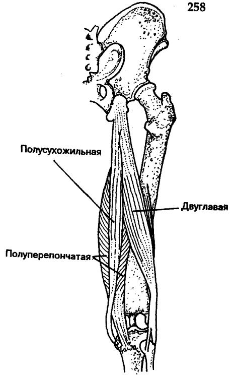 Скачать реферат повреждения коленного сустава препараты для лечения суставов локтя