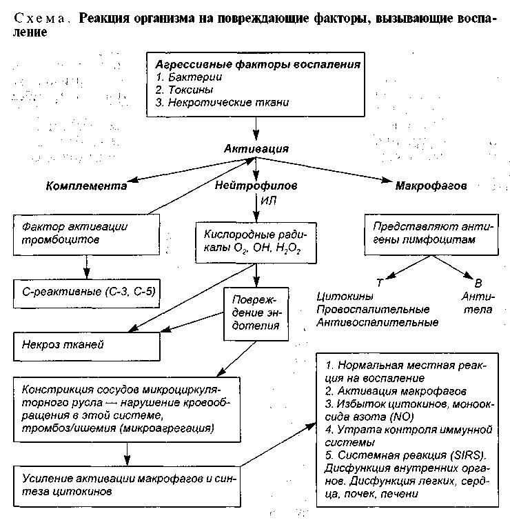 Воспалительные реакции схема