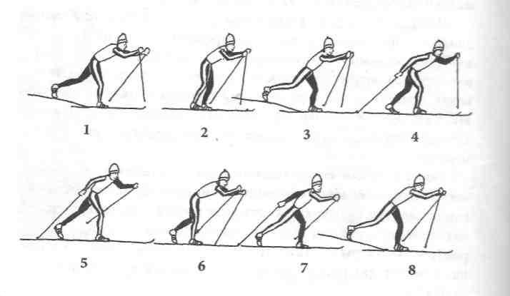 Основы техники передвижения на лыжах реферат 1927