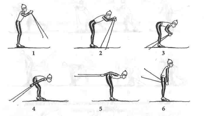 Основы техники передвижения на лыжах реферат 39