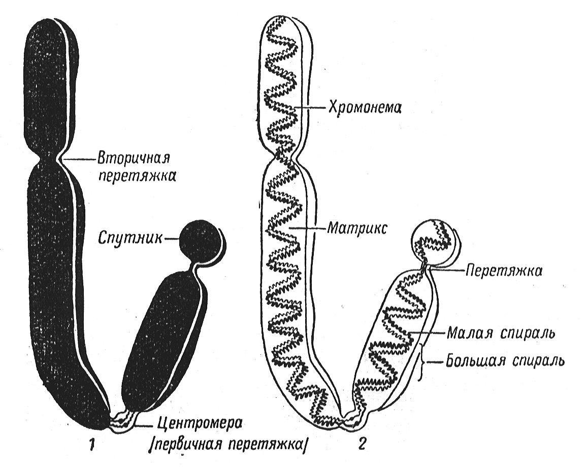 Методы изучения генетики человека