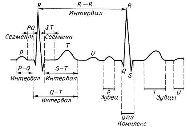 Что такое кардиограмма сердца (ЭКГ)