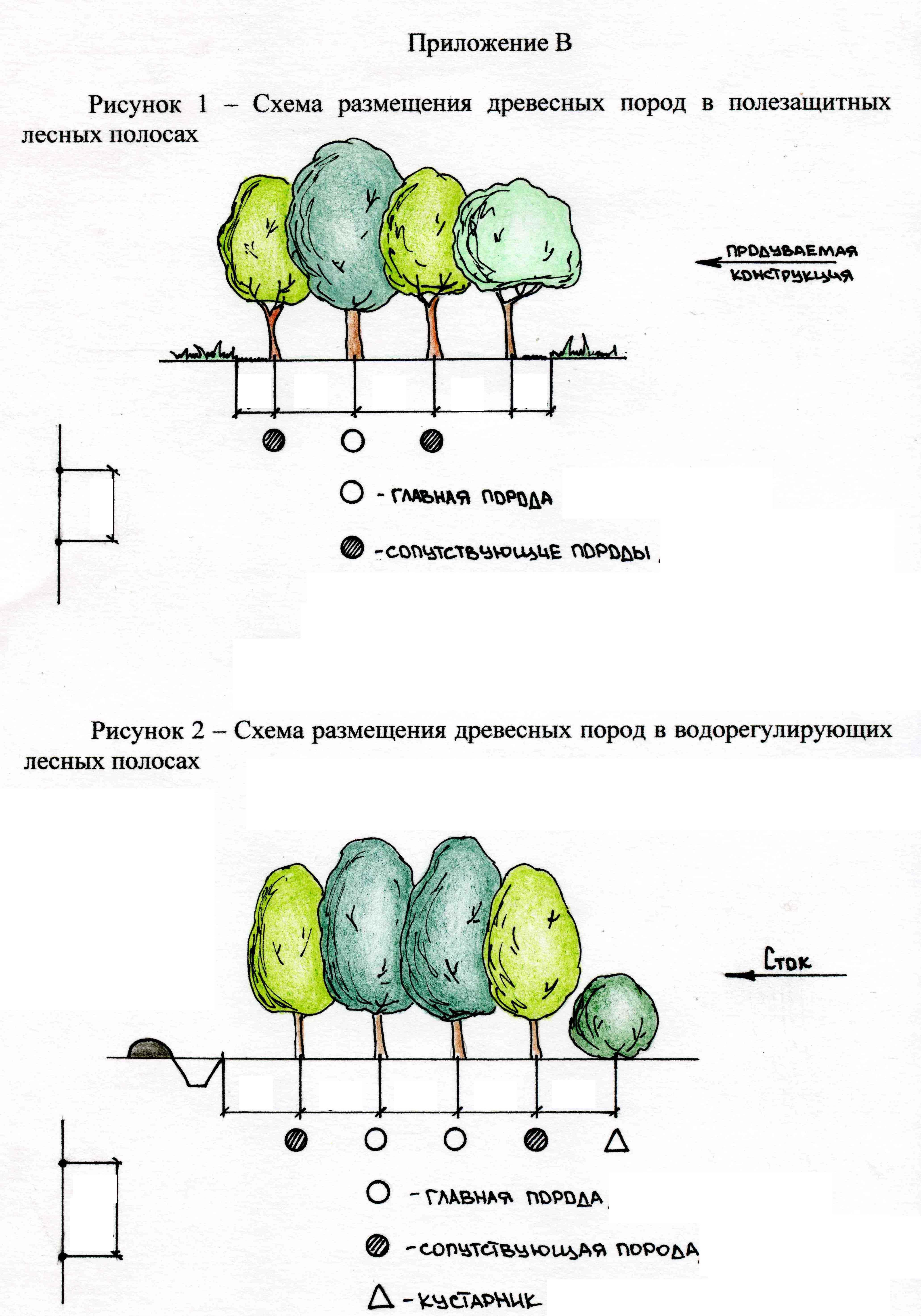 Схема полезащитной пятирядной лесной полосы