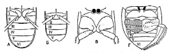 Из отряда жесткокрылые повсеместно вредят личинки жуков