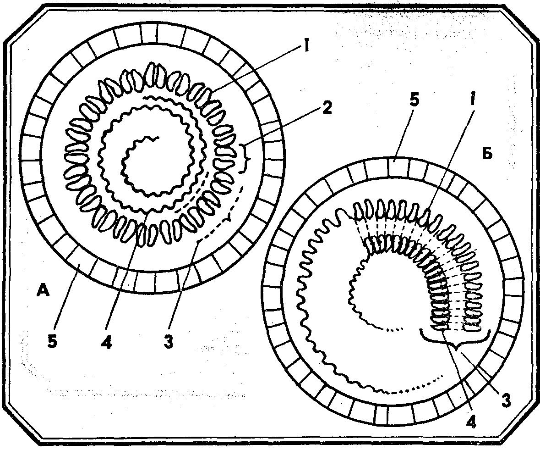 Цитология эукариотические и прокариотические клетки