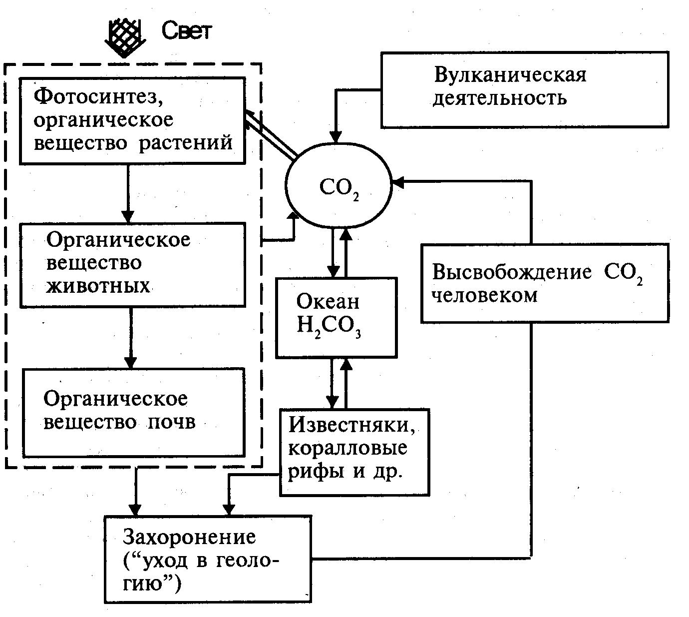 схема биологического круговорота веществ