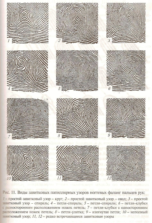 типы папиллярных узоров пальцев рук картинки так определить