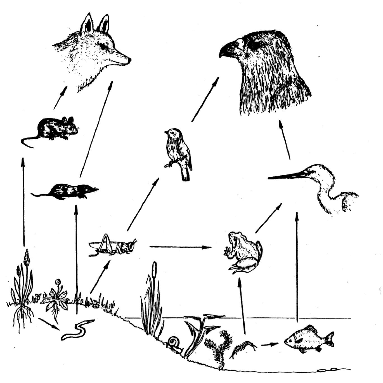 Связь между различными животными рисунок
