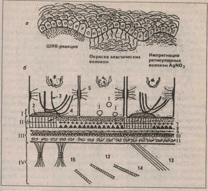 Цитологические особенности секреторных клеток