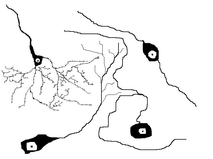 Основные функции ретикулярных клеток.