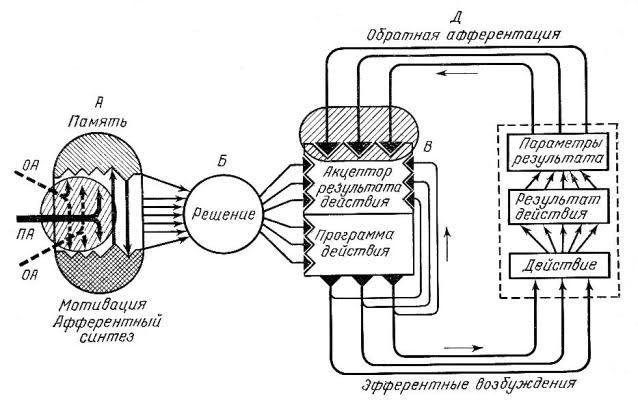 Функциональная система по анохину реферат 6201