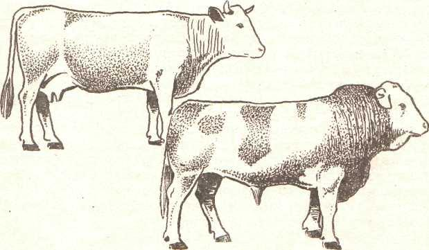 Метод оценки экстерьера животного