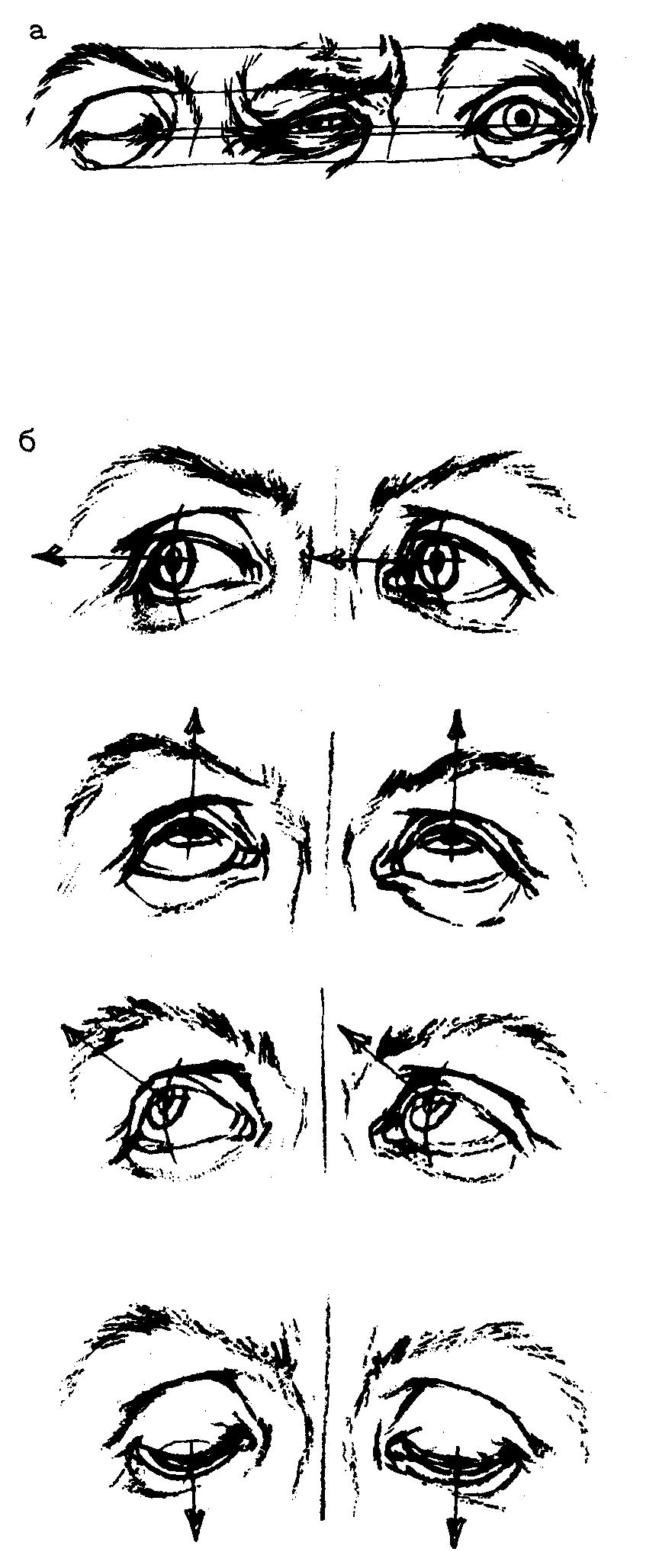 положение глаз картинки это