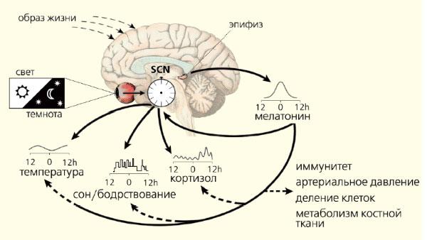Биология Руководство К Практическим Занятиям Маркина В