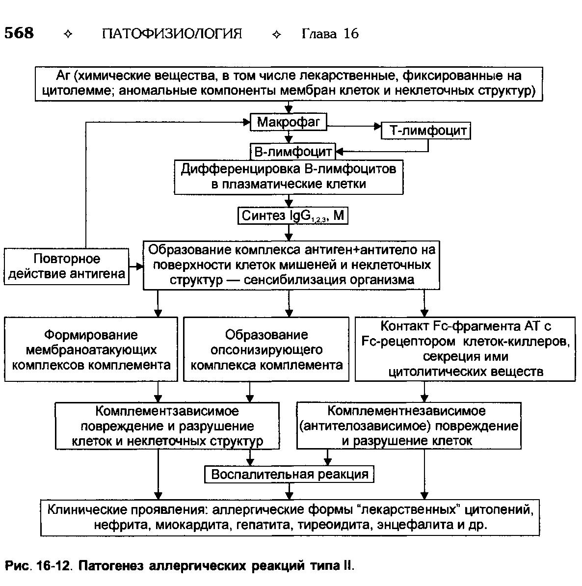 Механизмы аллергии, механизм формирования аллергических реакций
